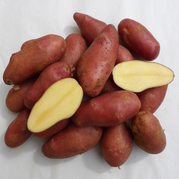 Kartoffelsorte Roseval
