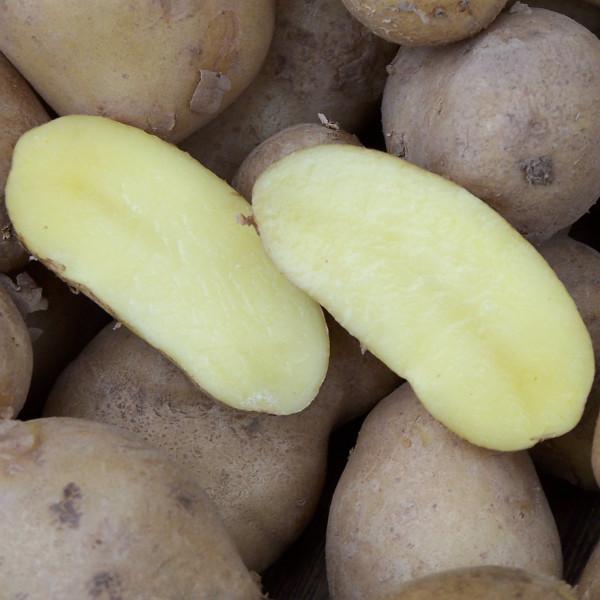 Pflanzkartoffeln Linzer Delikatess [fk] - zertifizierte Saatkartoffeln