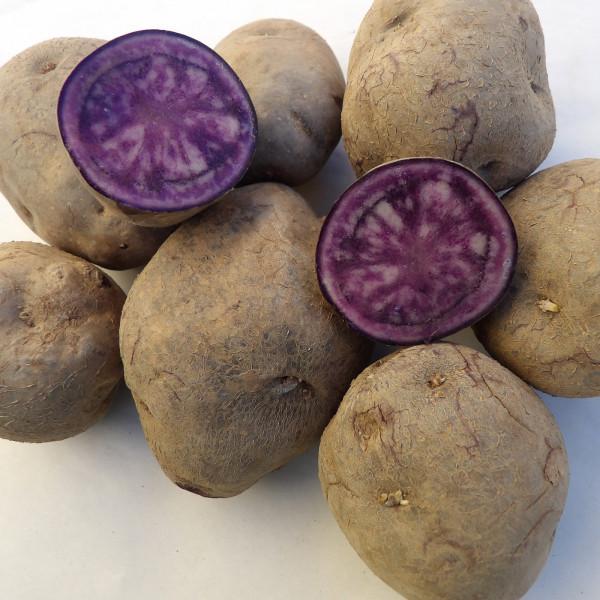 Schwarzer Teufel [vf], Gartenkartoffel