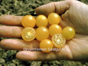Wildtomate Golden Currant (bio)