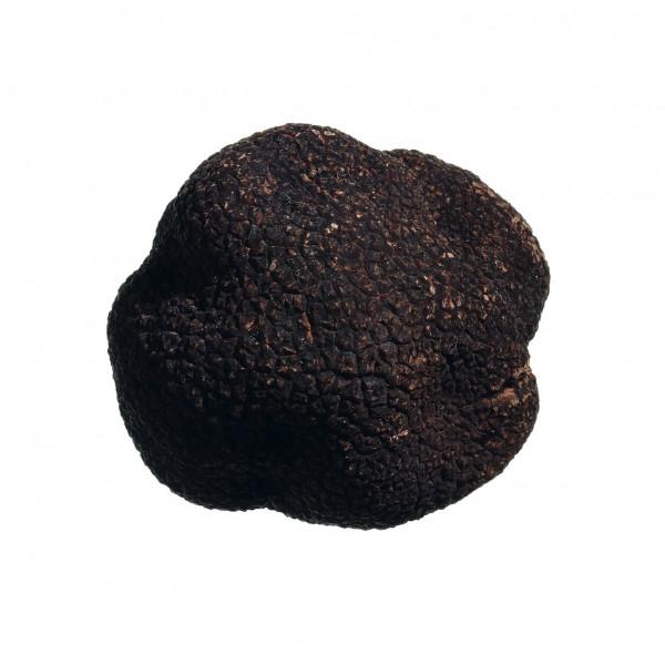 Frischer Wintertrüffel (Tuber melanosporum Vitt.) 40-45 g aus Umbrien