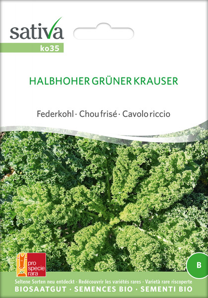 HALBHOHER GRÜNER KRAUSER (Bio-Saatgut)