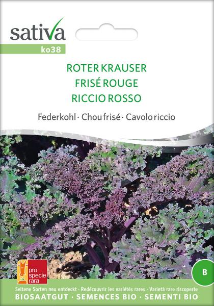 Grünkohl (Federkohl) 'ROTER KRAUSER' (demeter-Biosaatgut/ PSR)