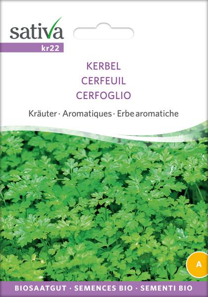 Kerbel (demeter-Biosaatgut)