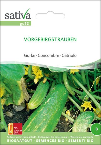 Gurke VORGEBIRGSTRAUBE (Bio-Saatgut)