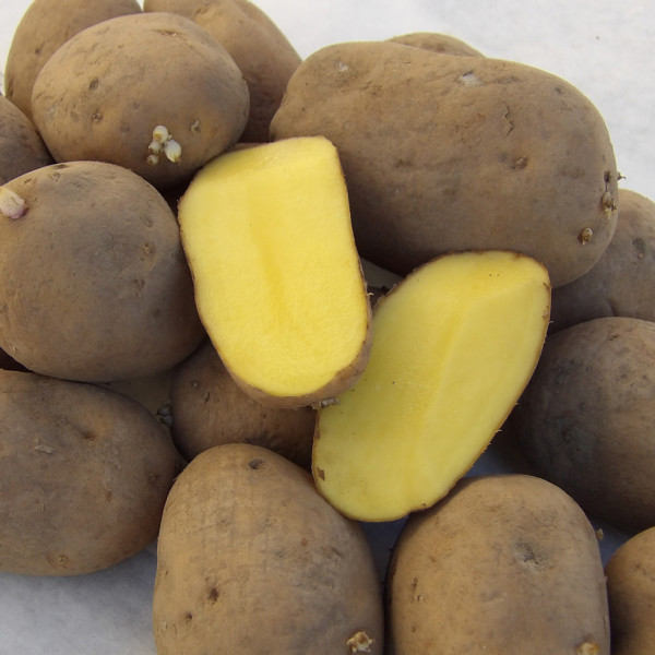 Pflanzkartoffeln GOLDMARIE (bio) [vf] - 2,5 kg Netze, zertifizierte Saatkartoffeln