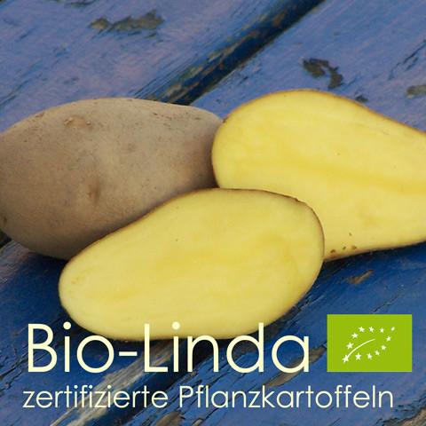 Pflanzkartoffeln Linda - zertifiziertes Pflanzgut (bio)