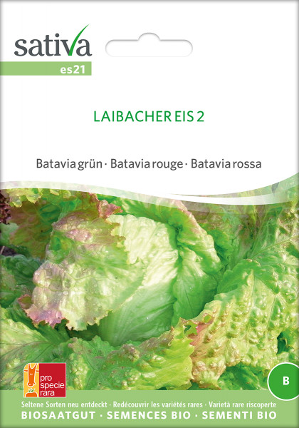Eissalat LAIBACHER EIS (demeter-Biosaatgut)