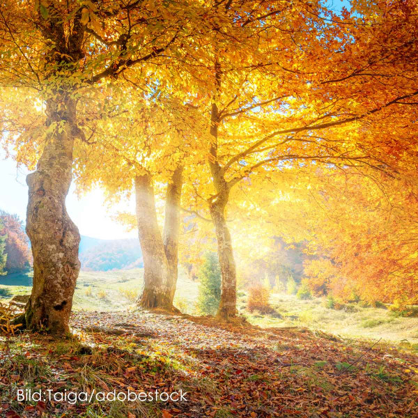 Goldgelber Oktober - unser goldgelbes Kartoffelpaket