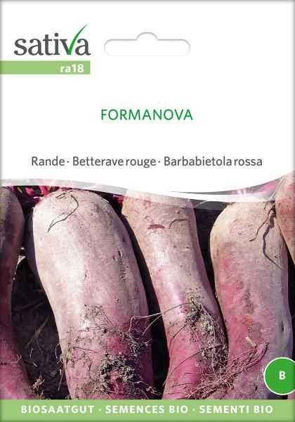 Rote Rüben FORMANOVA (demeter - Biosaatgut)