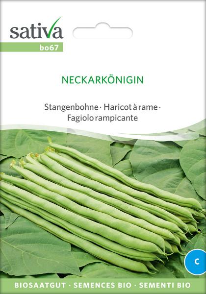 Stangenbohne 'NECKARKÖNIGIN' (Bio-Saatgut)