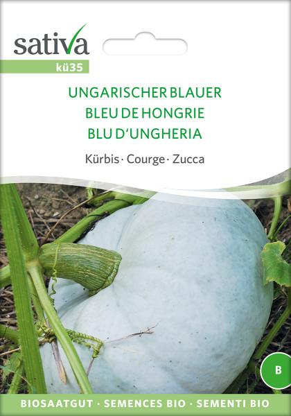 Kürbis UNGARISCHER BLAUER (demeter-Saatgut)