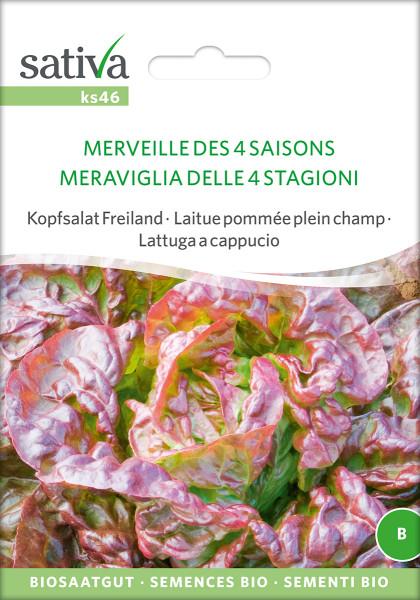 Freilandsalat 'MERVEILLE DES 4 SAISONS' (Biosaatgut)