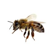 besonders Bienenfreundlich