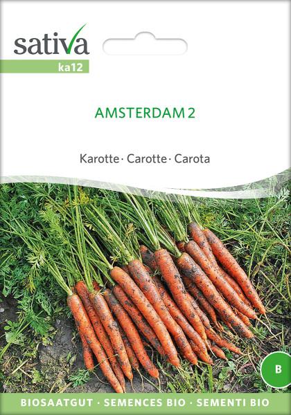 Karotte AMSTERDAM (Bio-Saatgut)