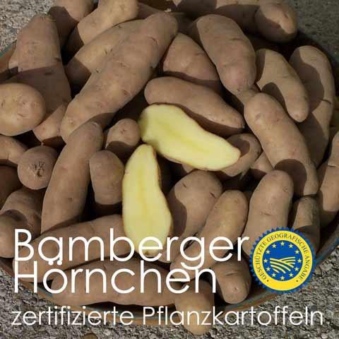 Pflanzkartoffeln Bamberger Hörnchen - anerkanntes Erhaltungs-Pflanzgut
