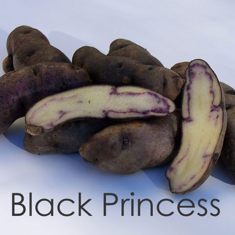 Black Princess [vf]