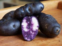 Vitelotte - Trüffelkartoffeln von der Loire · gewaschen