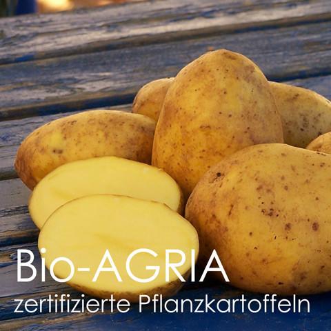 Pflanzkartoffeln Agria [vf]-zertifiziertes Pflanzgut (bio)