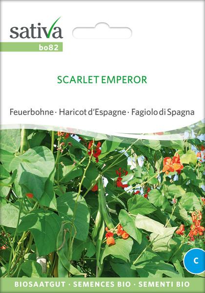 Feuerbohne SCARLETT EMPEROR (Bio-Saatgut)