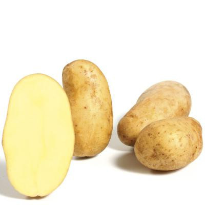 Pflanzkartoffeln CILENA [fk] - zertifizierte Saatkartoffeln