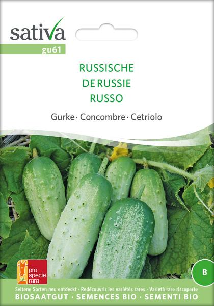 Russische Gurke (demeter-Bio Saatgut)