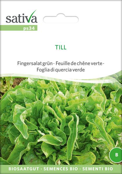 Pflücksalat 'TILL' (demeter Biosaagut)