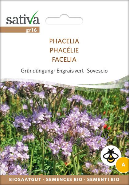 Phacelia (Bienenfreund) Gründüngung & Bienenweide