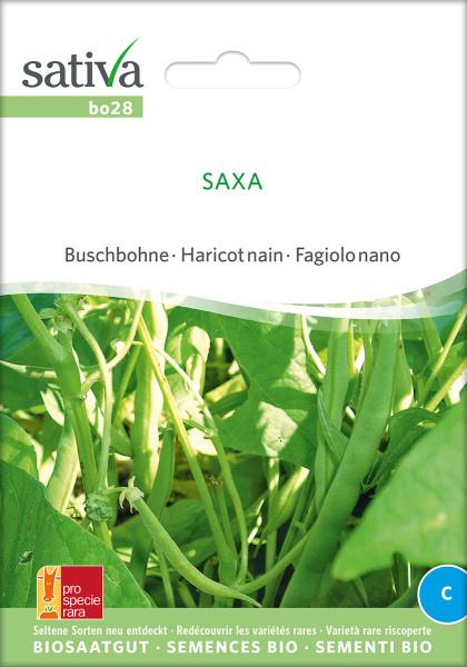 Buschbohne 'SAXA' (Saatgut - demeter)