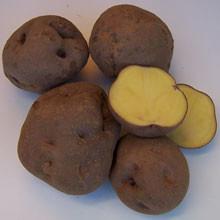 Rot-Gelbe Frühe [vf]