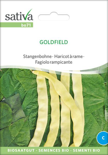 Stangenbohne Goldfield (Bio-Saatgut)