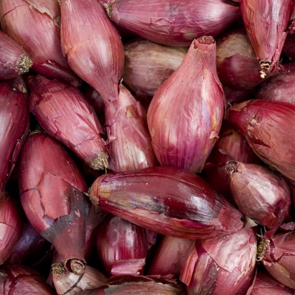 Rote Tropea Zwiebeln IGP aus Kalabrien