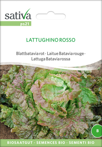 Pflücksalat Blattbatavia rot - LATTUGHINO Rosso (Biosaagut)