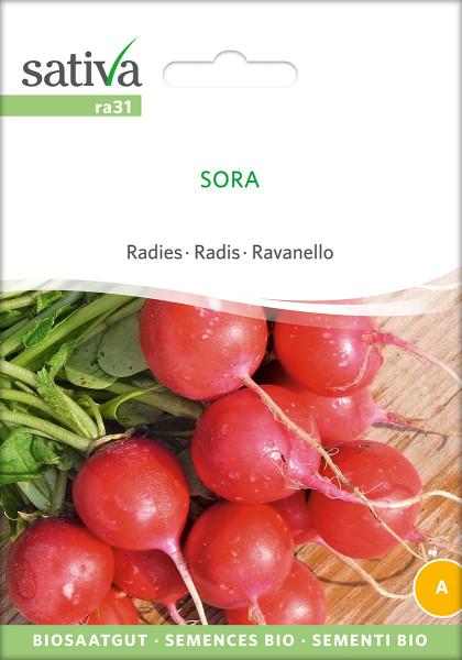 Radies 'SORA' (demeter-Biosaatgut)
