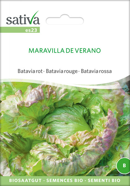 Eissalat-Bataviasalat 'MARAVILLA DE VERANO' (demeter-Biosaatgut)