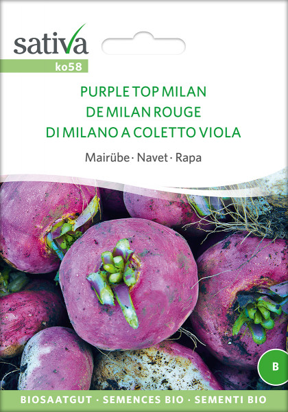 Mairübe - Purple Top Milan (Bio-Saatgut)